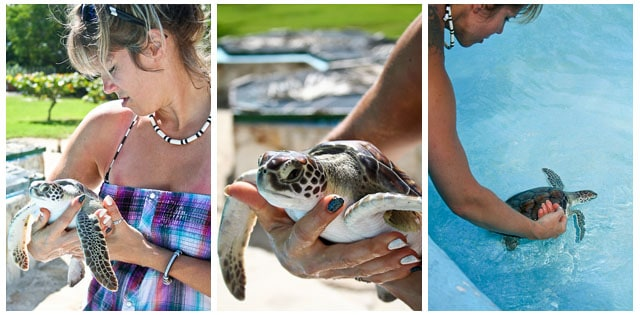 Turtle Farm - Cayo Largo