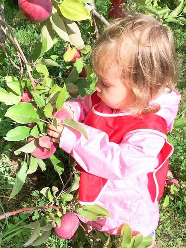 tildoo-apple-picking-1