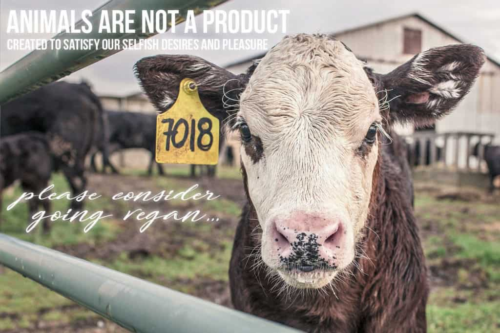 Animals are not a product